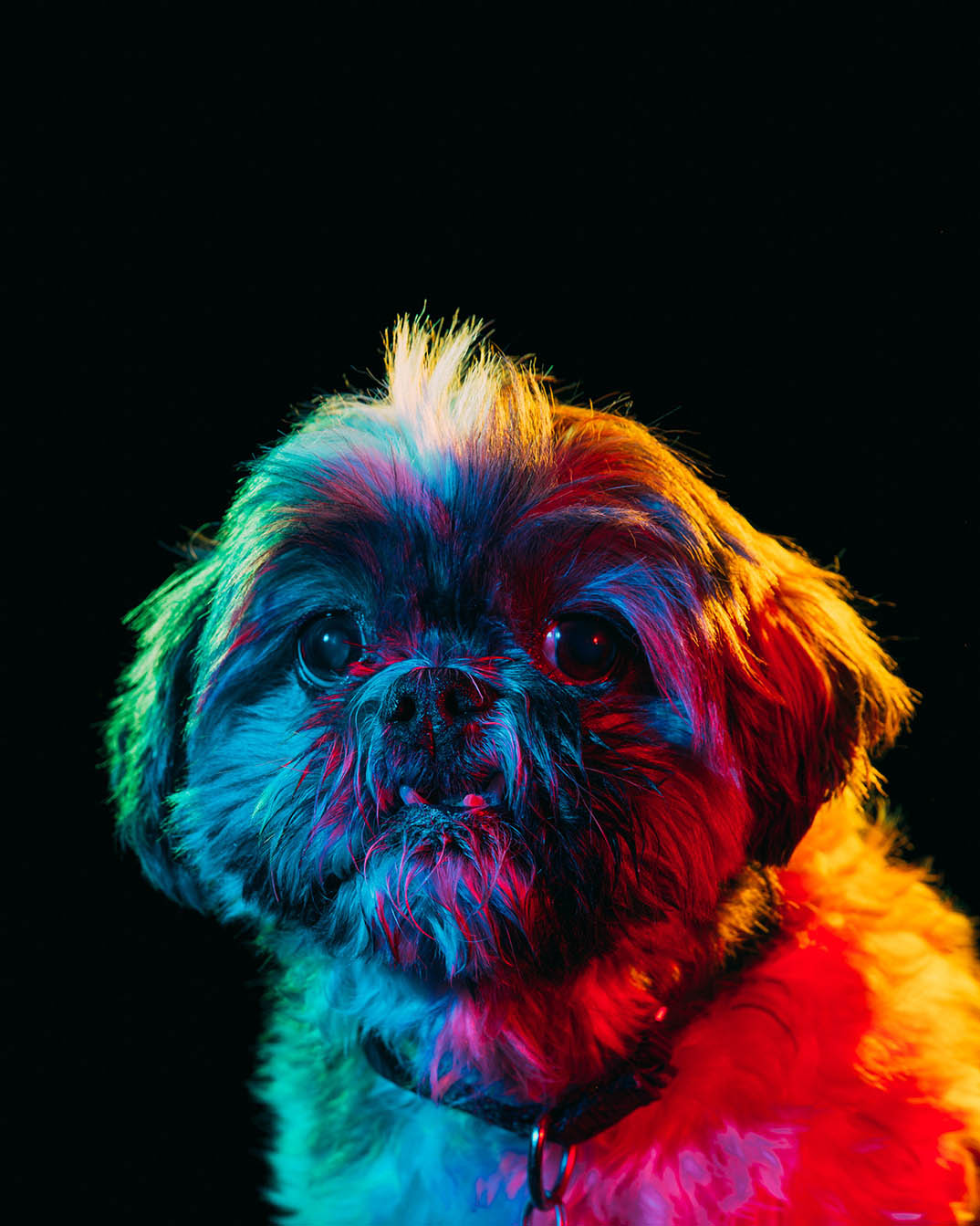 Dogs By Paul Octavious Theinspiration Com