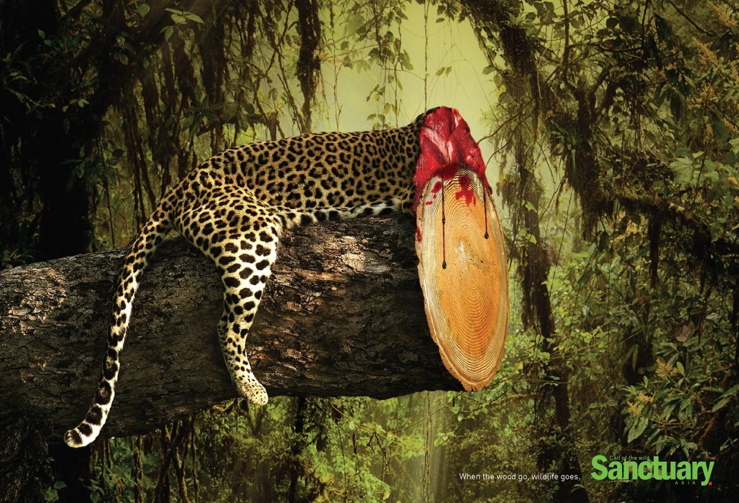 sanctuary asia when the wood go wildlife goes by ganesh p