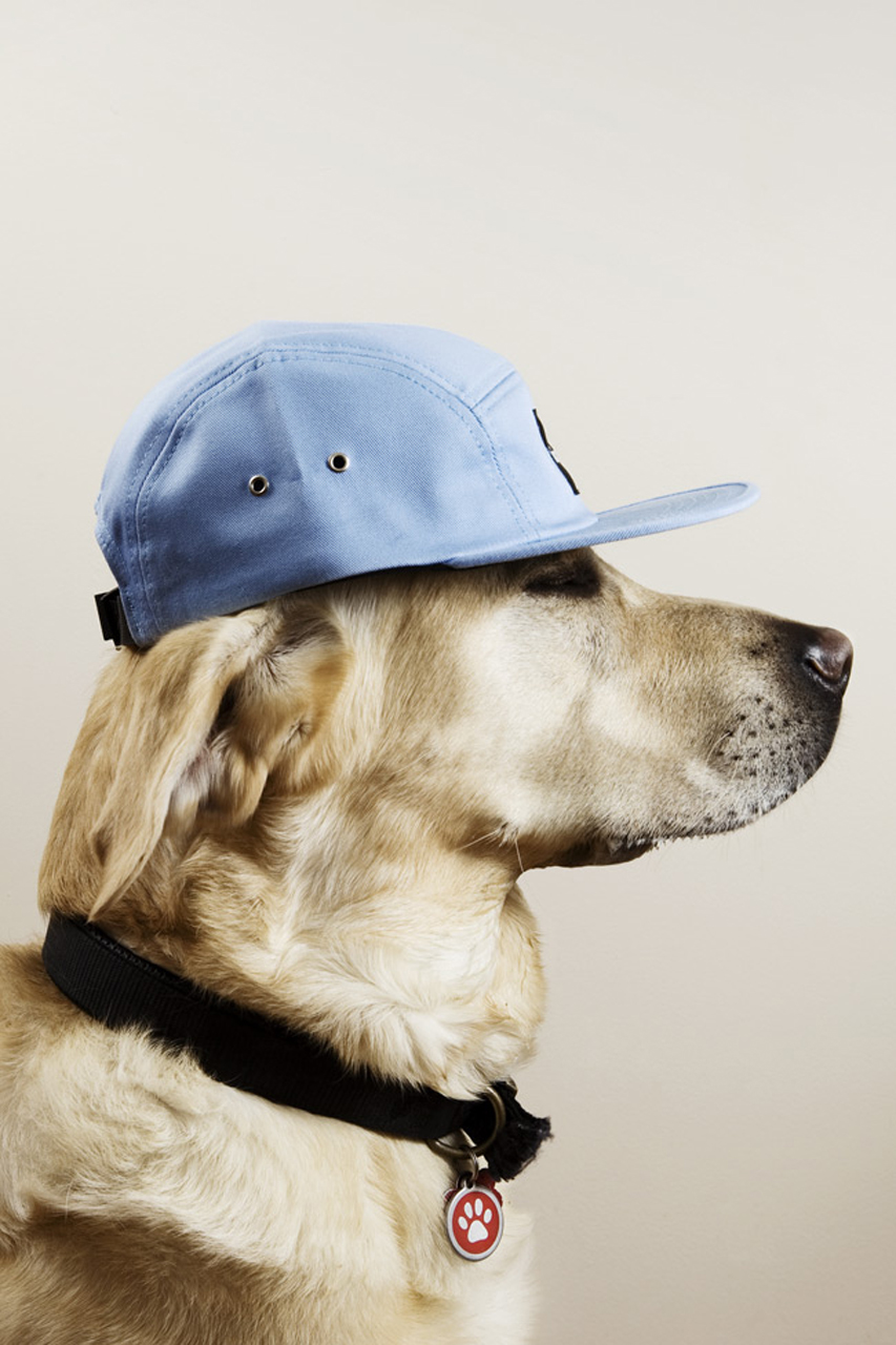 THEINSPIRATION.COM caps. | Dogs with