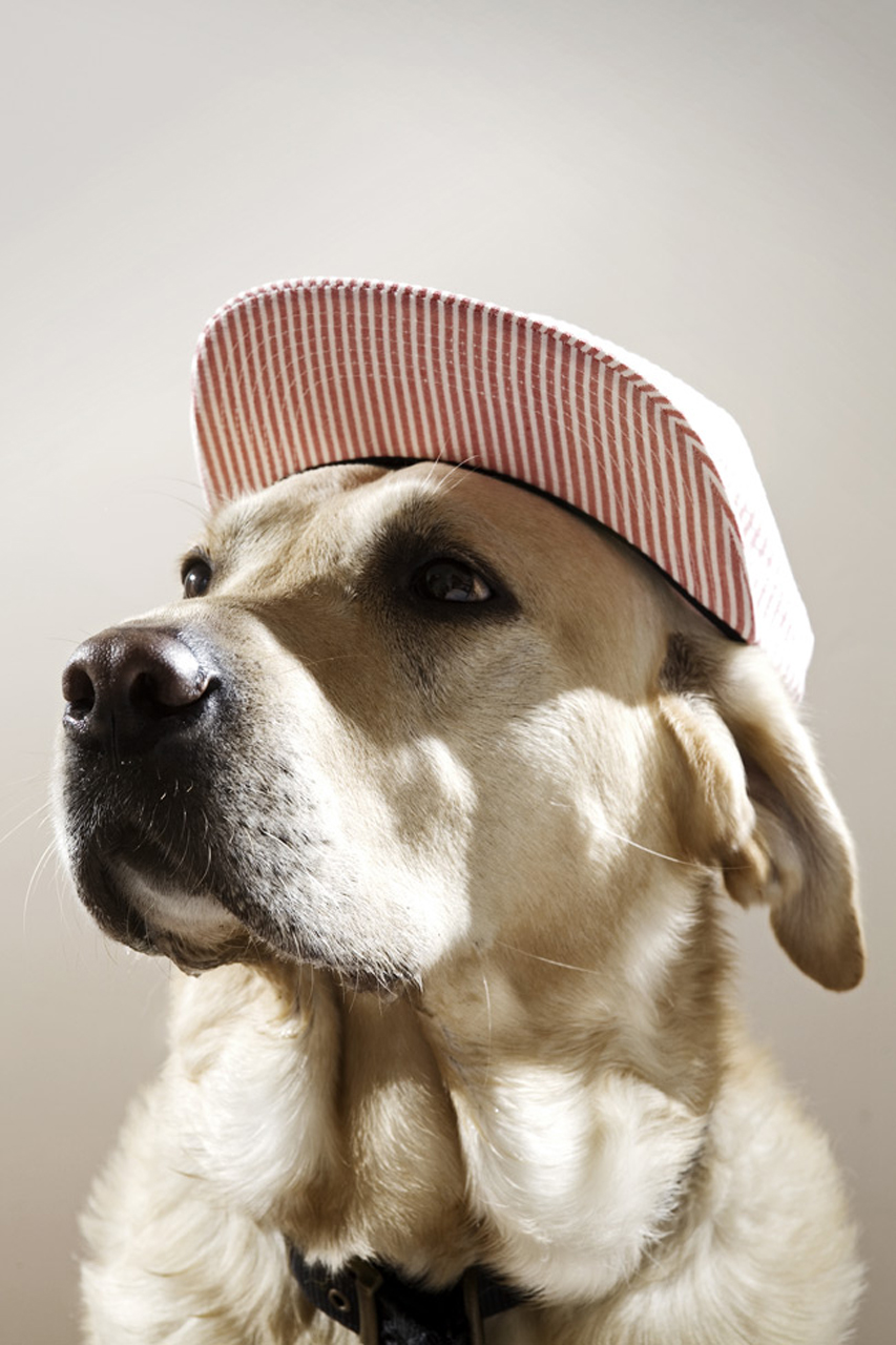 THEINSPIRATION.COM Dogs | with caps.