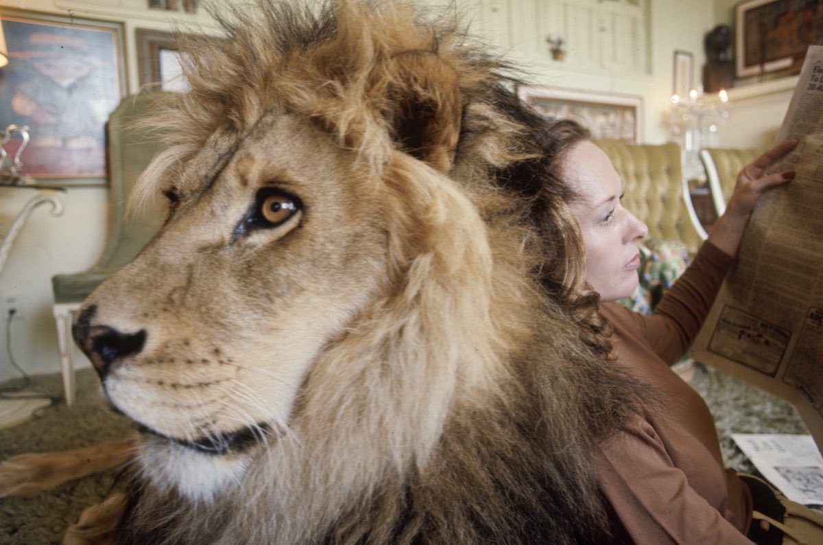 Living With Neil the Lion